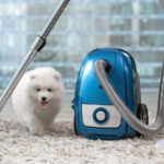 Carpet Care And Cleaning Advice For Pet Owners